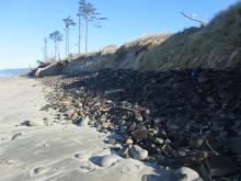 Before the storm, none of the rocks were visible. This photo is typical of the dunes along the campground and spit.
