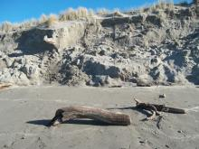 Storm and King Tides leave significant erosion of the vegetated dunes.