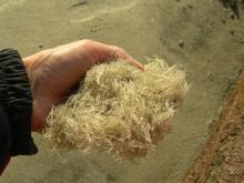 Mystery fibers on beach