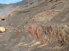 Eroded bluff with roots showing
