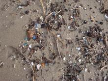 Lots of tiny plastic bits and the remains of cellophane worms in the wrack line.