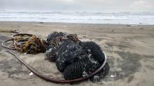 This bundle of fish net had just washed up on the sandy part of Cape Cove.