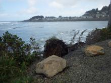 New clump of eroded hillside at same location of last year's fallen tree along Yachats Ocean Road south of river.