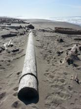 Telephone pole among the driftwood