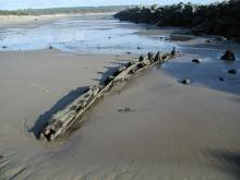 Wooden shipwreck remains next to the Siuslaw River North Jetty, 50 yards east of the Coast Guard observation tower.  I suspect it's the Wilhelmina, a small coastal steam-powered freighter lost January 1911.
