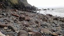 Sea lions at Cape Cove