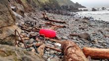 Tsunami debris and sea lions