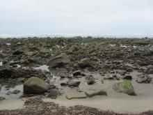 Exposed rocks, 	Beach adjoining Cape Lookout picnic area