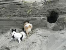 Found tunnels in dunes