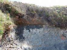 Erosion under vegetated sand dune
