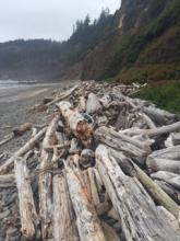 Logs, Lost Bay Cave, Short Beach