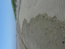 Small wrack line, small size debris.