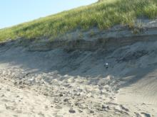 Dunes mainly intact through mile 335.