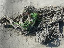 Small fish net, plastic.