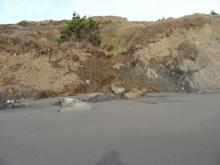 Minor landslide on the beach south of Crook Point.