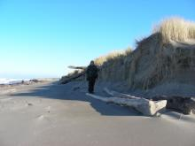 Dave is 6 feet tall and so there has been a lot of erosion of the foredune this winter.