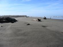 Last month this area had large dunes on the west side of the beach were the sand had been plowed for the Snowy Plover Habitat Restoration Site.  The ocean has taken this sand out, but the wood remains piled in this area.