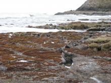 Rocks at low tide with seaweed or algae growth.