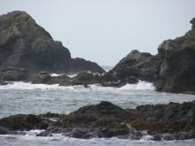 We often see Harbor Seals on this off-shore rock.
