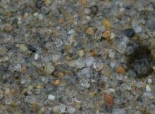 Extreme closeup of wet sand, showing variety of sand grains less than a millimeter in diameter
