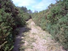 This trail is going to require a lot of maintenance to keep the gorse from over taking it.