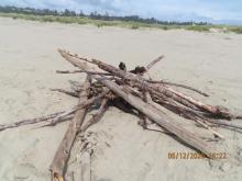Driftwood bonfire setup