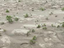 Vegetation growing on beach