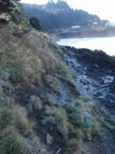 PT3 Rodea Point veg slump looking S
