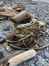 Tangle of kelp and driftwood