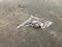 Dead ray