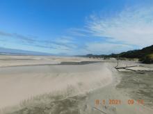 Seasonal summer beach dunes
