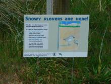 Snowy Plover sign at Bayshore Beach Club close up