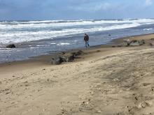 Rocks revealed at Surftides
