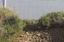 Elizabeth Street Inn Landslide
