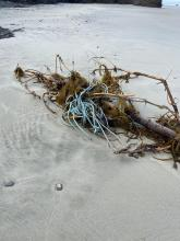 Fishing line entangled in driftwood