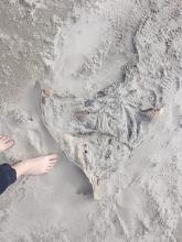 dead ray beach sand