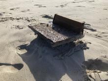 Wood near the latest tide line