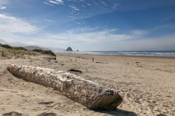 Giant driftwood on North Chapman Beach.