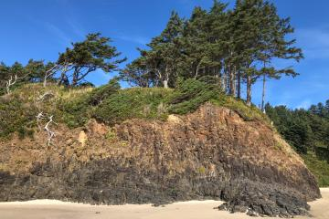 Wind blown trees capping basalt rock North Chapman Beach.