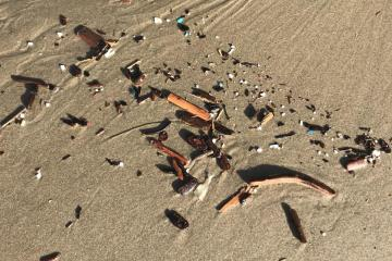Debris line all along beach