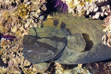 Rock or Eel fish