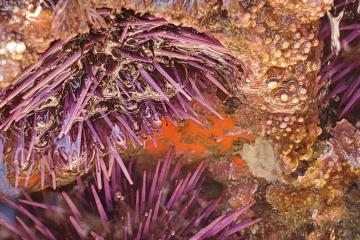 Bright orange algae