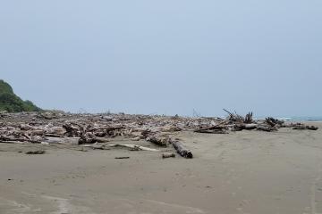 driftwood piles