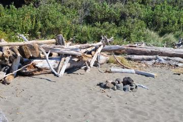 Fire ring at driftwood structure