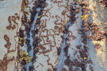 Artful Algae