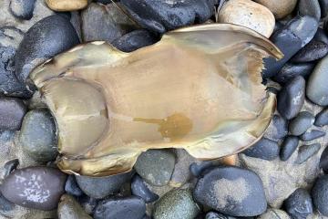 """Unknown """"pod"""" found on beach"""