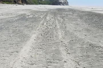 Tracks, probably from ATV