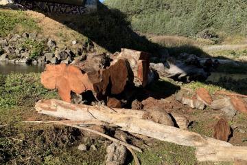 Driftwood/chainsaw