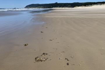 Tide Line, Cannon Beach
