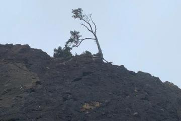 Tree Clinging to Cliff
